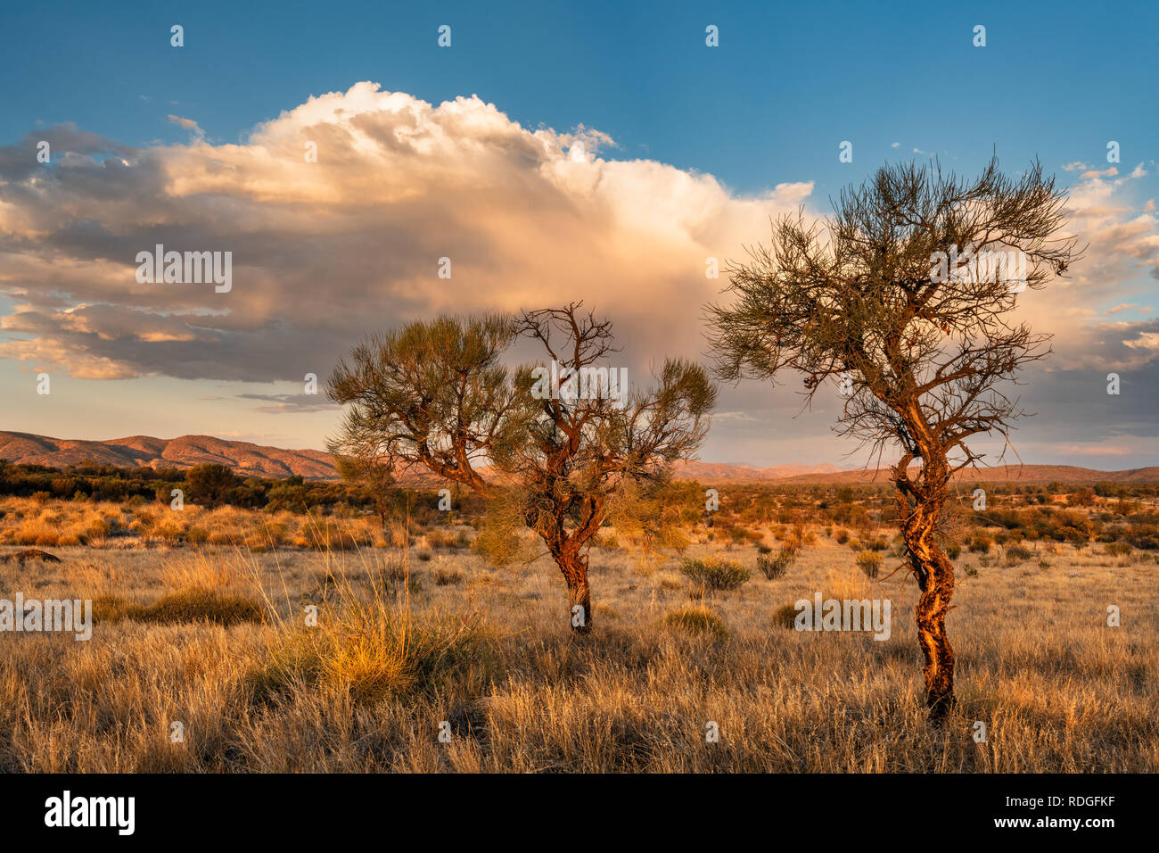 Evening mood in MacDonnell Ranges. - Stock Image