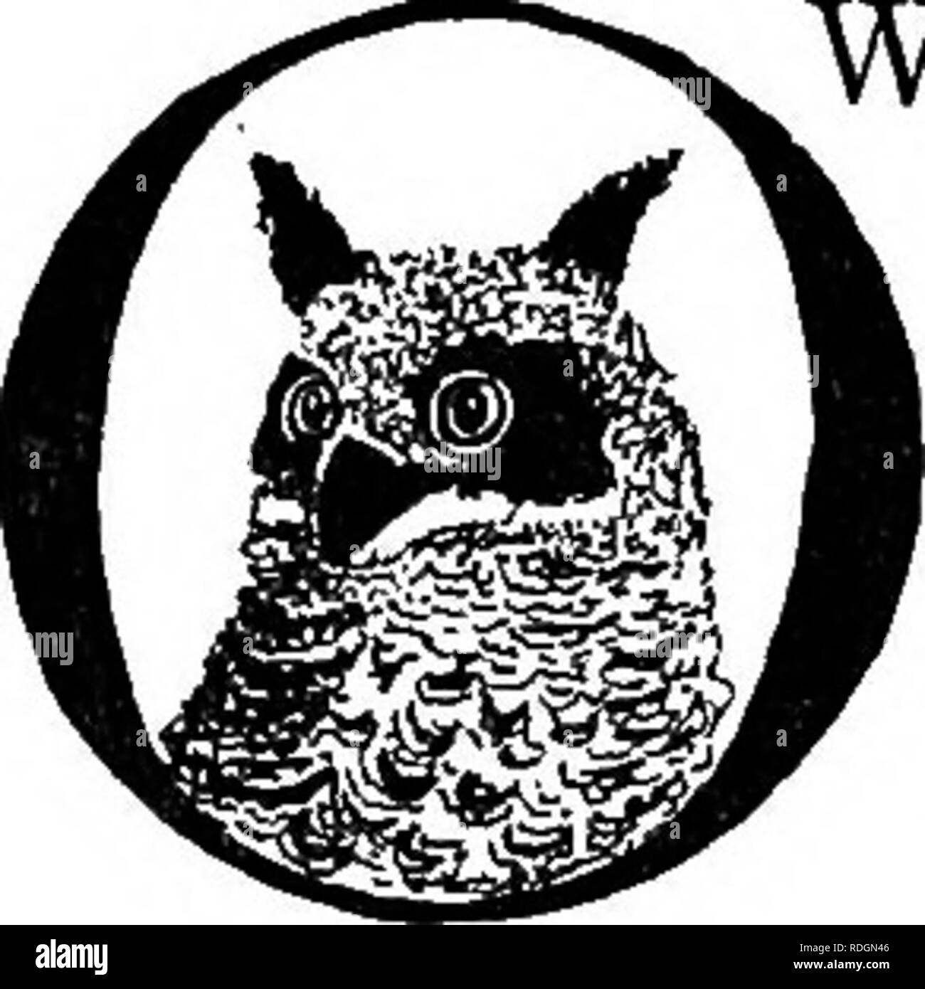 The pet book  Pets  THE OWL ^WLS have long been considered the