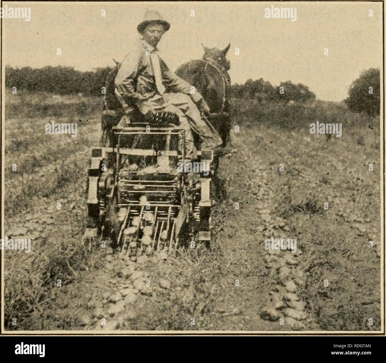 . Effective farming; a text-book for American schools. Agriculture. Potatoes 205 114. Harvesting and storing. — Much of the white-potato crop is dug by hand (Fig. 89) with a potato hook or a spading fork. Horse-drawn diggers are used where large acreages are grown. Of these there are several types, ranging from a plow fitted with iron rods for the purpose of shaking the dirt from the tubers, to implements like the one shown in Fig. 90, that dig, ele- vate, and deposit the potatoes on the ground. A large part of the late crop is stored for use in the winter. A storage place for potatoes should  - Stock Image