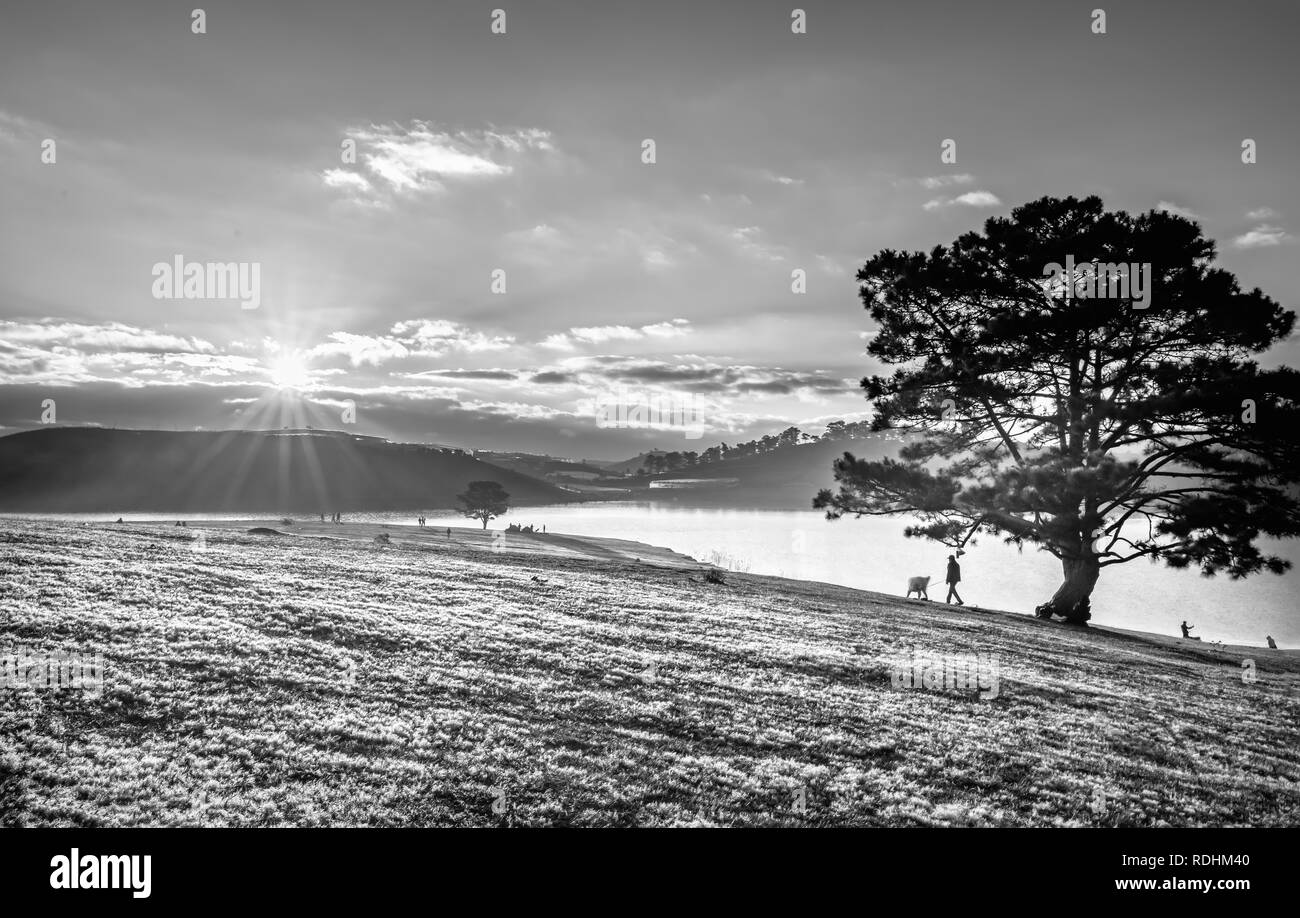 Magical snow grass and pine tree dawn when the sun shines mysterious rays into the grass covered with sparkling dew. - Stock Image