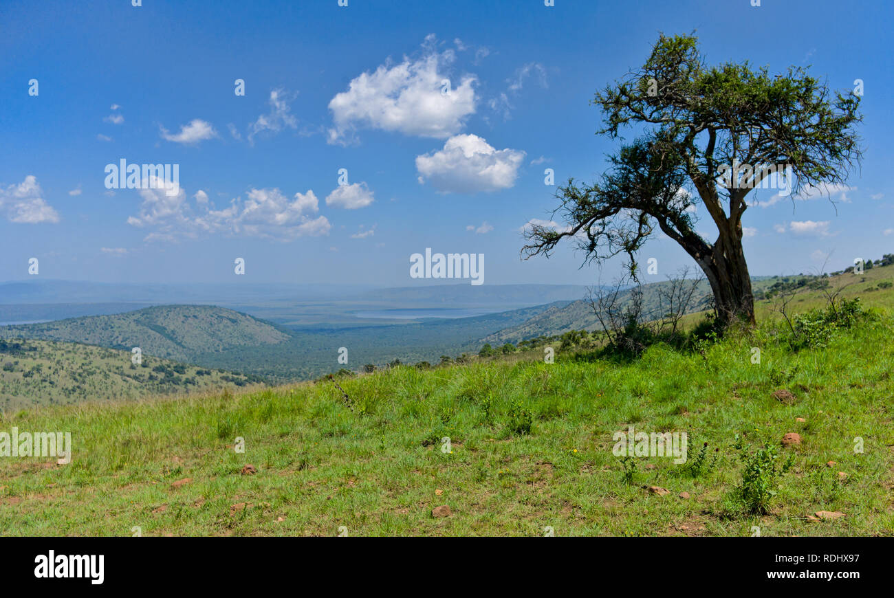 Akagera National Park, Parc National de l'Akagera, Eastern Province, Rwanda is a recovering conservation area managed by African Parks. - Stock Image