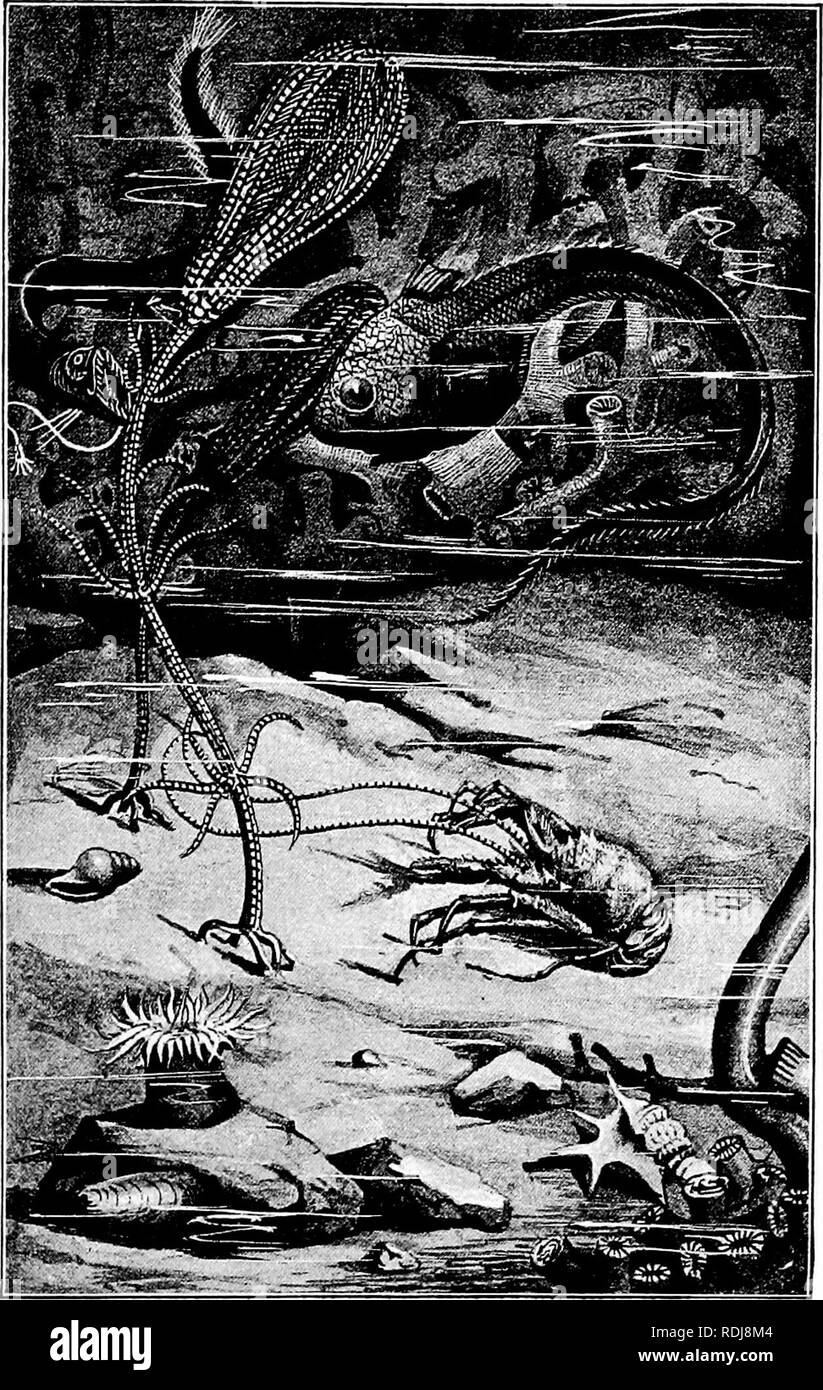 . The study of animal life. Zoology. The Wealth of Life. Fig. I.—Suggestion of deep-sea life. (In part from a figure by W. Marshall.). Please note that these images are extracted from scanned page images that may have been digitally enhanced for readability - coloration and appearance of these illustrations may not perfectly resemble the original work.. Thomson, J. Arthur (John Arthur), 1861-1933. New York, C. Scribner's sons [printed at the Edinburgh press] - Stock Image