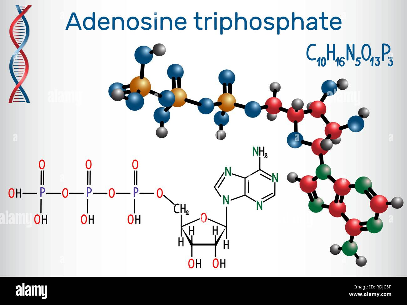 Adenosine triphosphate (ATP) molecule, is intracellular energy transfer and required in the synthesis of RNA. Structural chemical formula and molecule - Stock Image