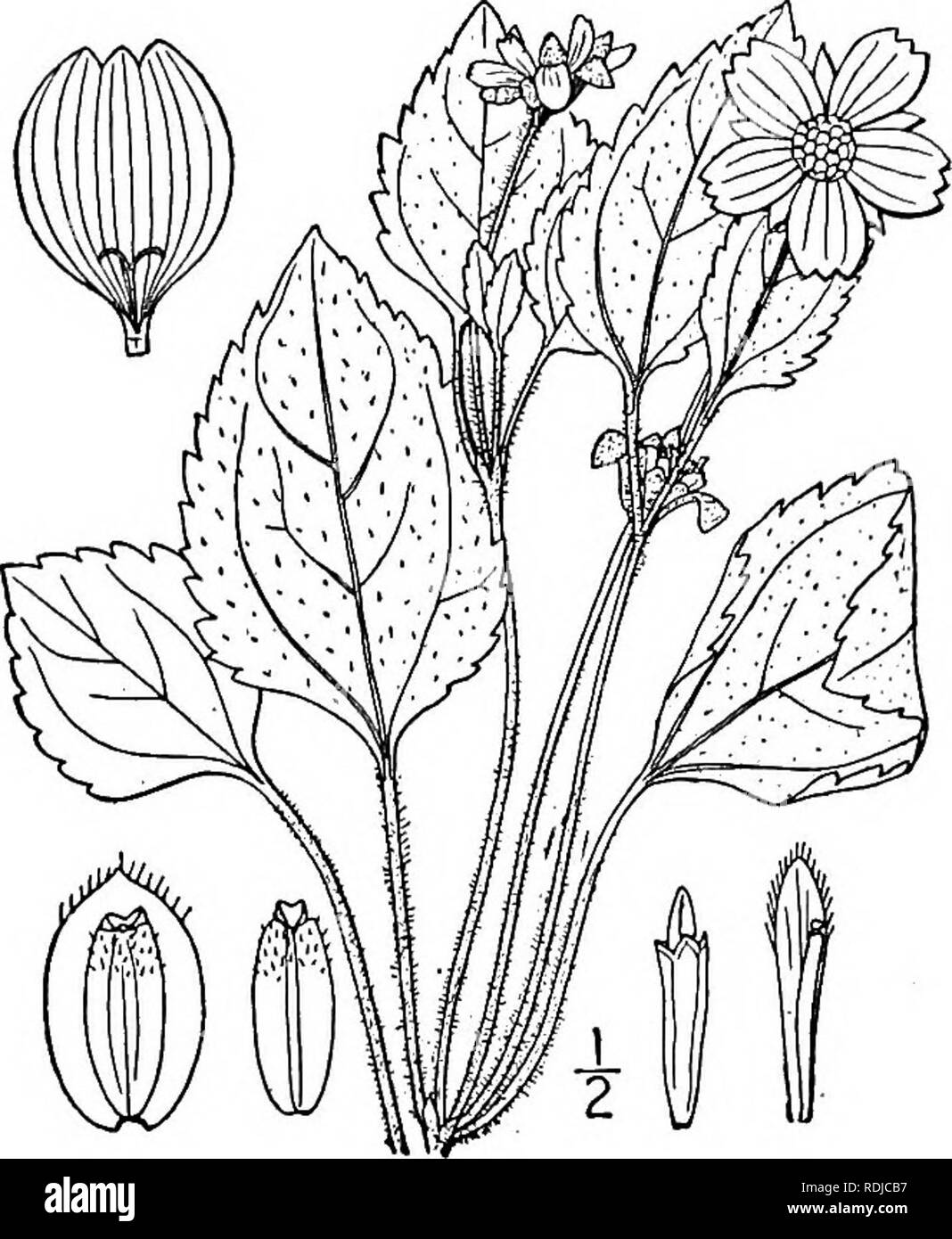 An illustrated flora of the northern United States, Canada