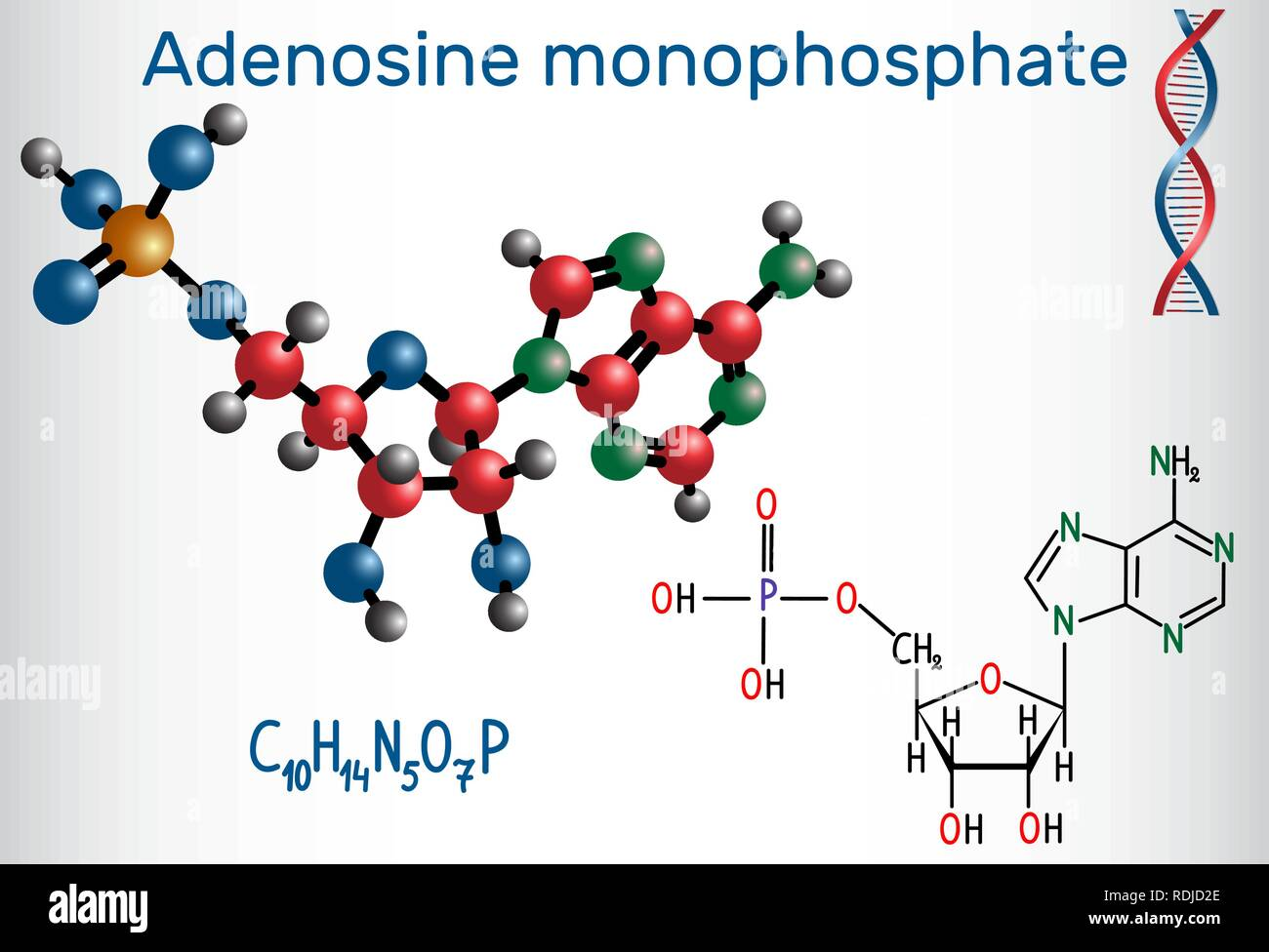Adenosine monophosphate (AMP) molecule, it is an ester of phosphoric acid and the nucleoside adenosine monomer in the production RNA . Structural chem - Stock Image