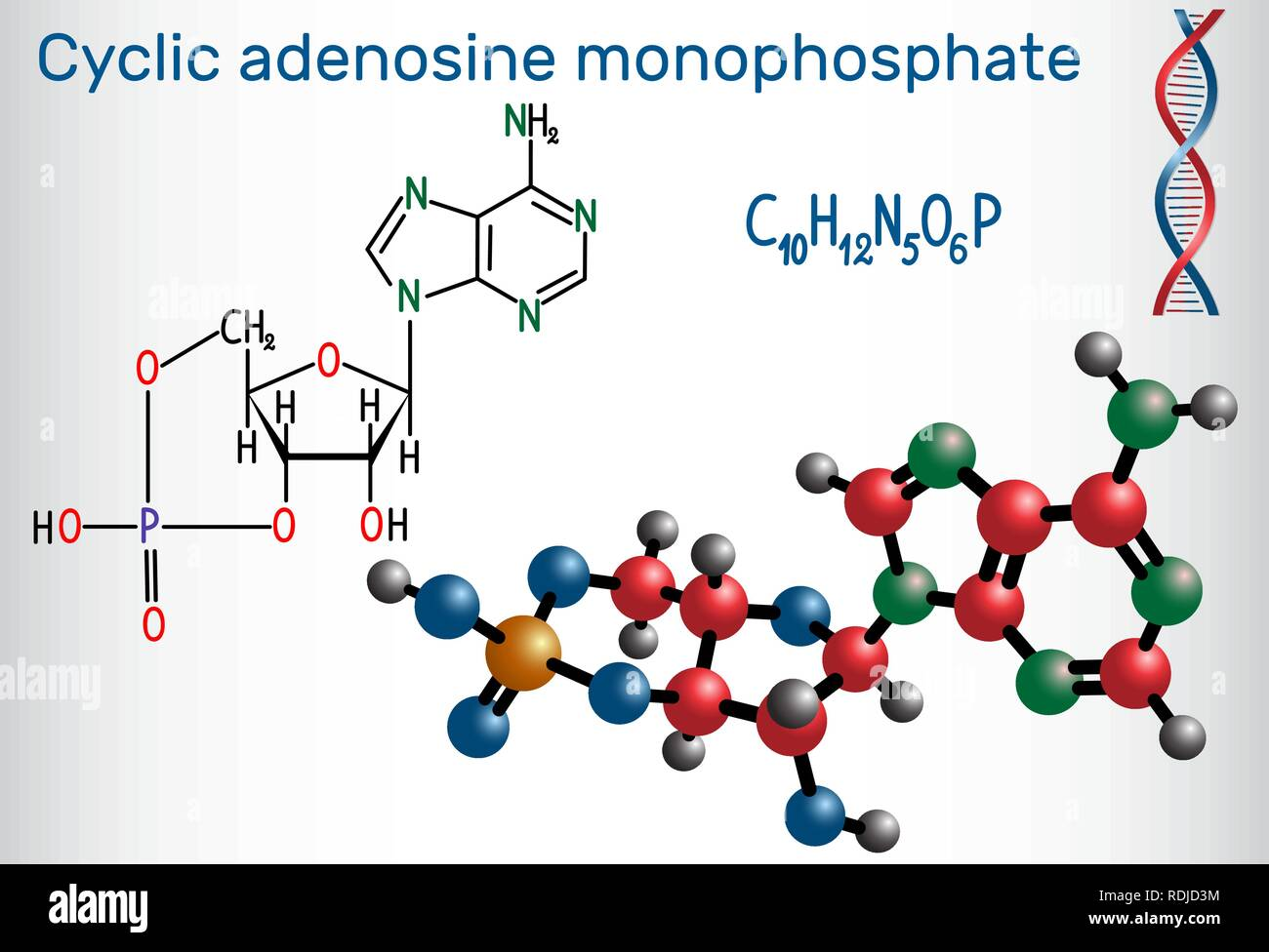 Cyclic adenosine monophosphate (cAMP) molecule, it is a derivative of adenosine triphosphate (ATP) and used for intracellular signal transduction . St Stock Vector