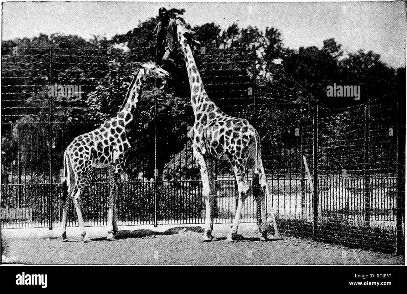 Famous Animal Black and White Stock Photos & Images - Alamy