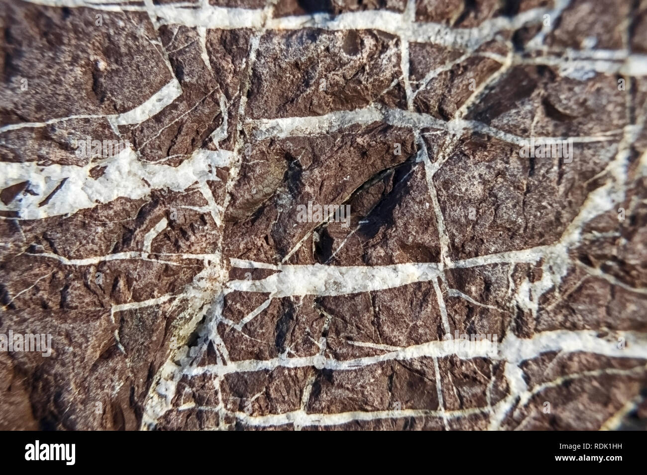 Texture curb stone with white veins – macrophoto - Stock Image