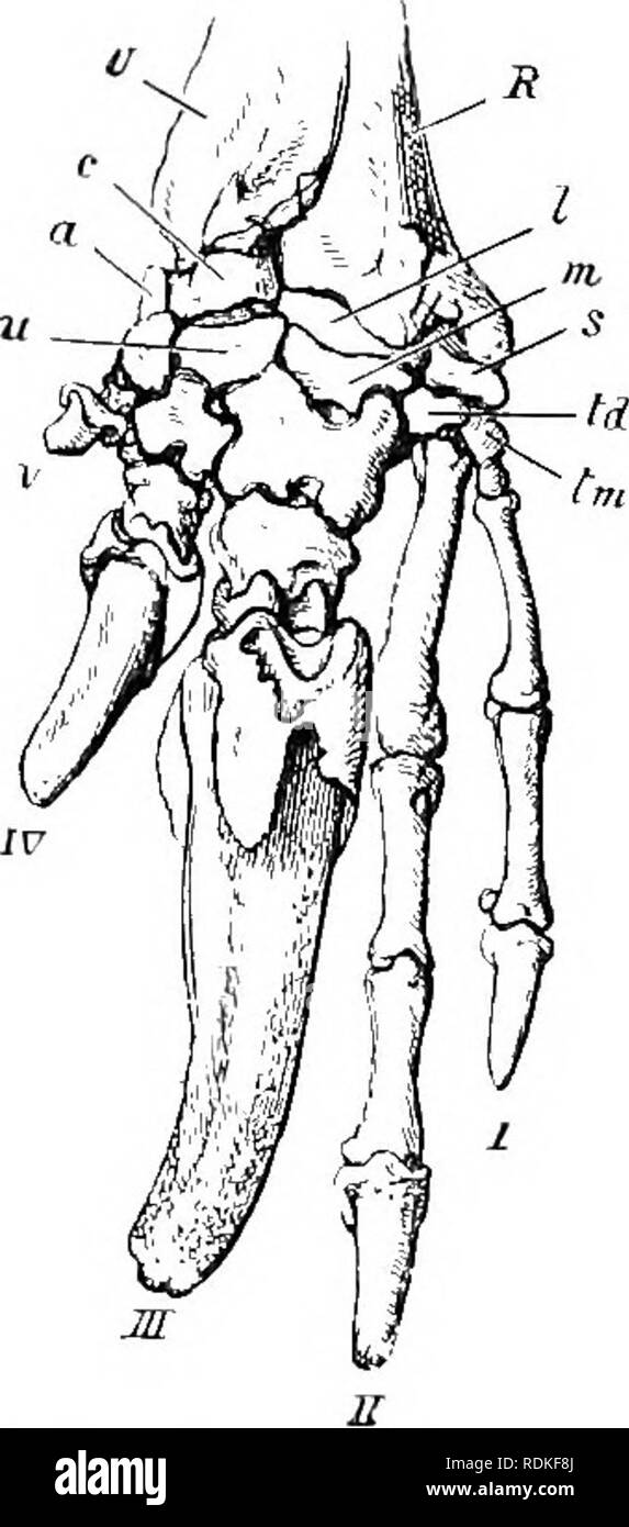 The Cambridge Natural History Zoology Fig 100 Bones Of The