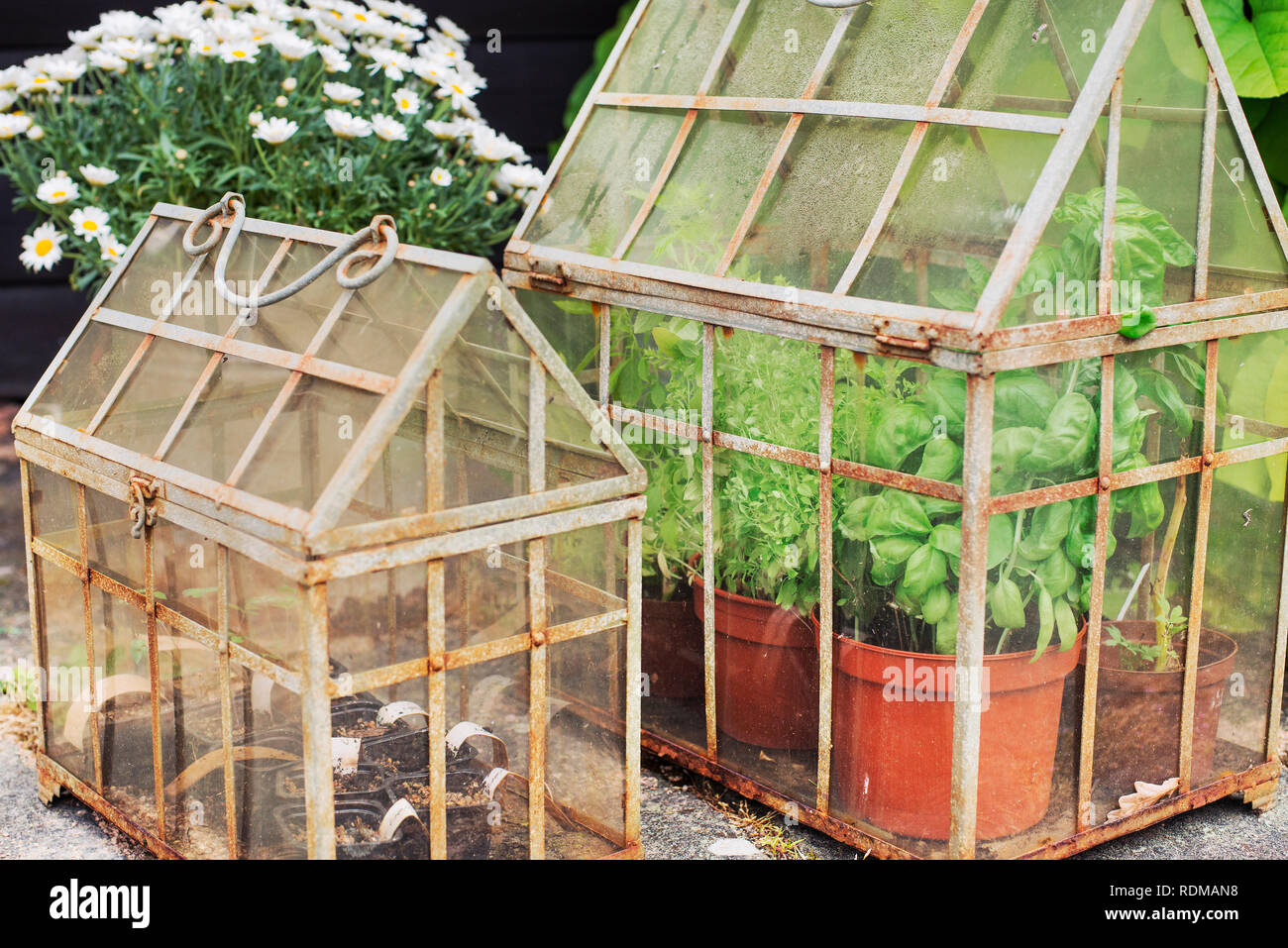 Fabulous Plants In Small Greenhouses Stock Photo 232172788 Alamy Home Interior And Landscaping Oversignezvosmurscom