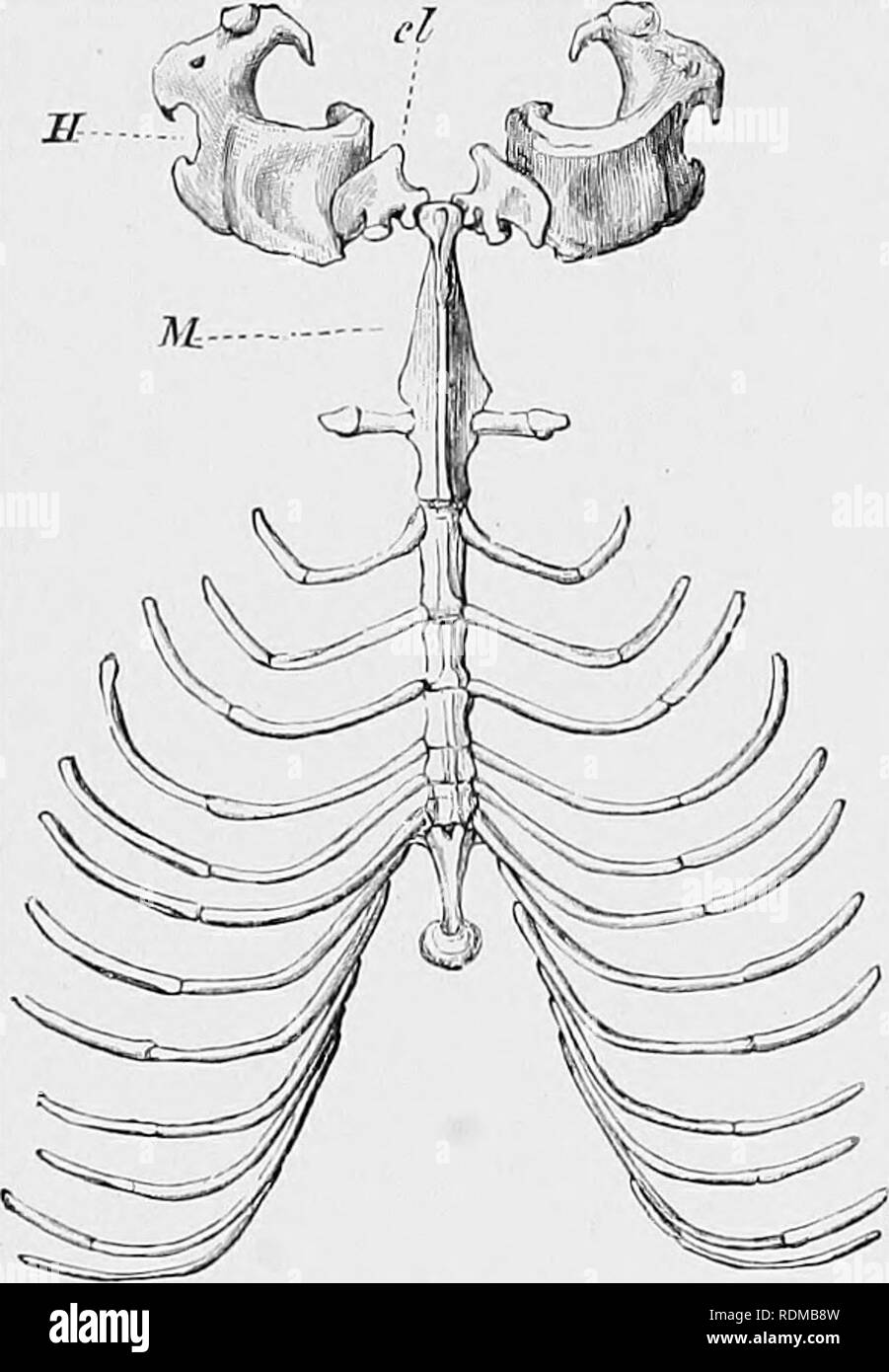 The Cambridge Natural History Zoology Ribs And Sternum Are