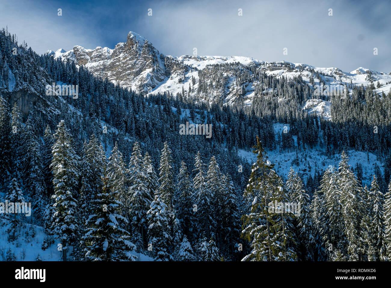 Schneeschuhwandern im Diemtigtal, Berner Oberland - Stock Image