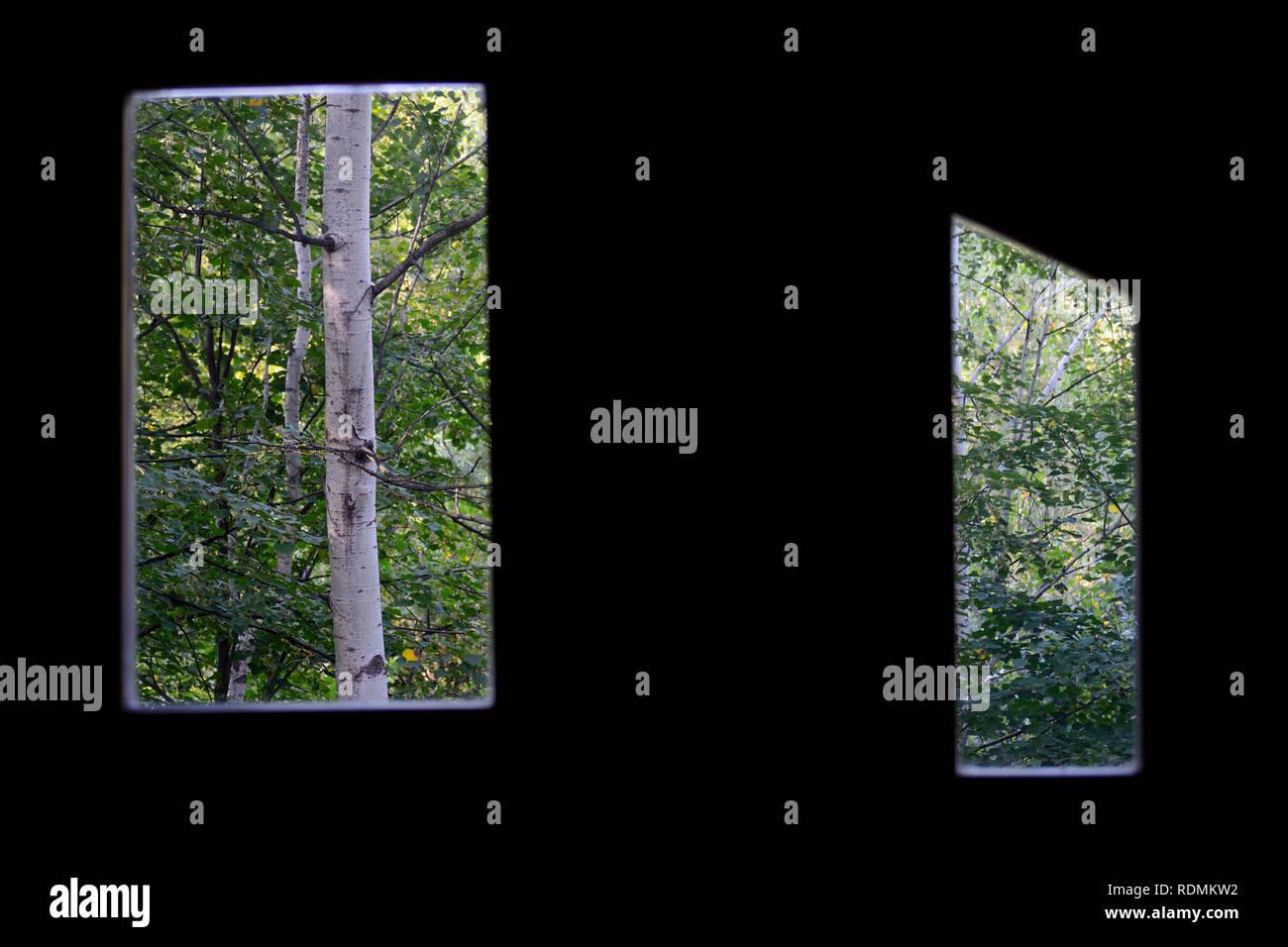 Forrest through windows - Stock Image