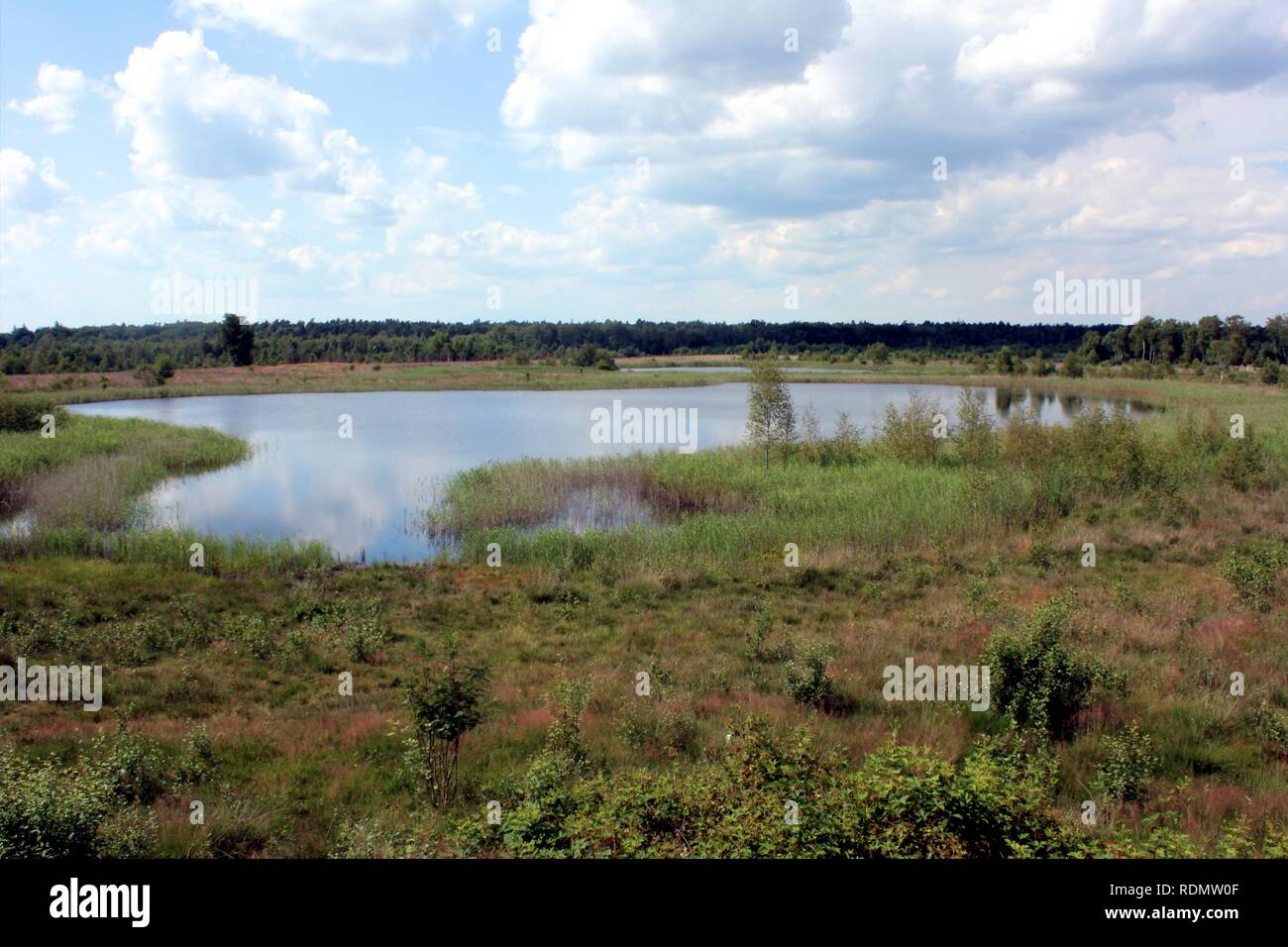 A large bog pool in the Gildehauser Venn, a raised bog nature reserve in the west of Lower Saxony, Germany. Stock Photo