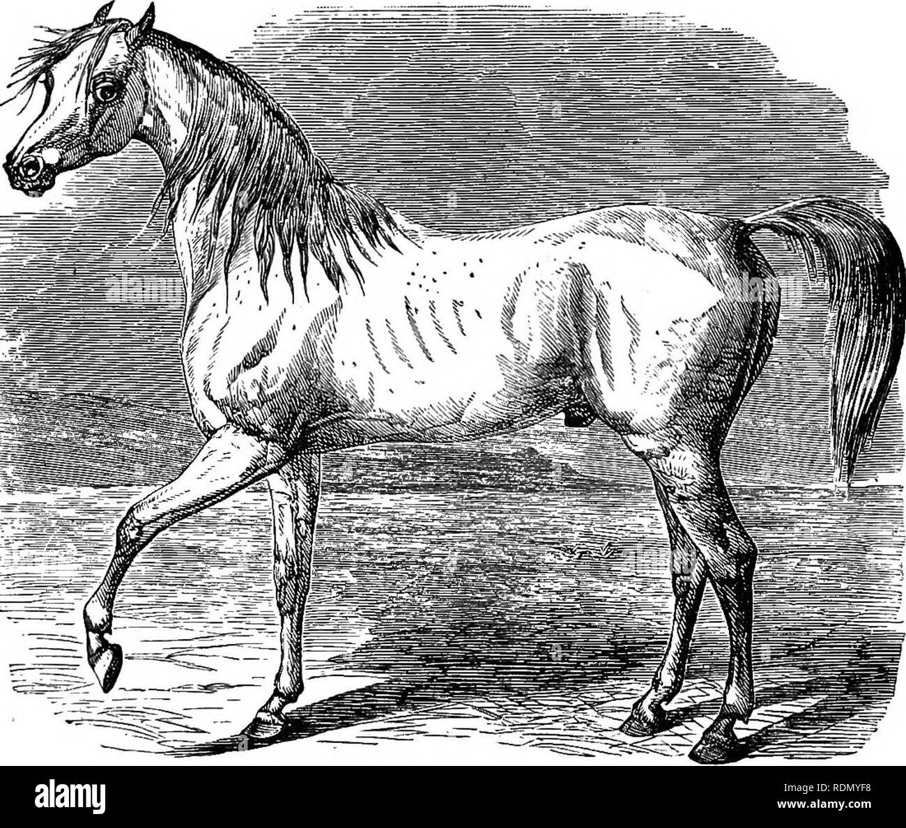 The horse in the stable and the field: his management in