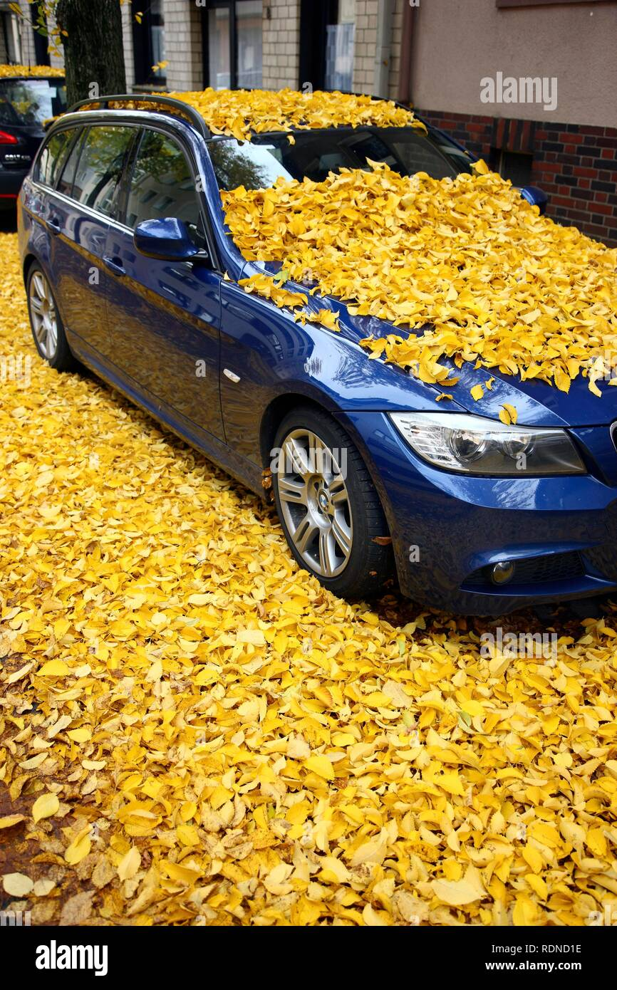 Parked car, fully covered with autumn leaves - Stock Image