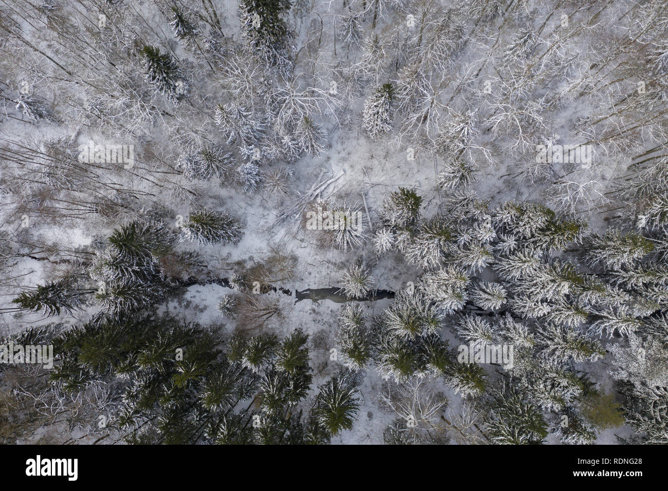 Drone photography of winter forest and stream during day - Stock Image