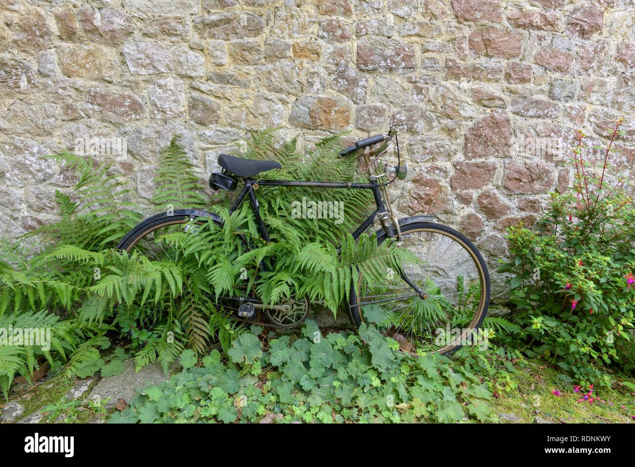 Bicycle and fern, moated castle Ightham Mote, Tonbridge and Malling, England, United Kingdom - Stock Image