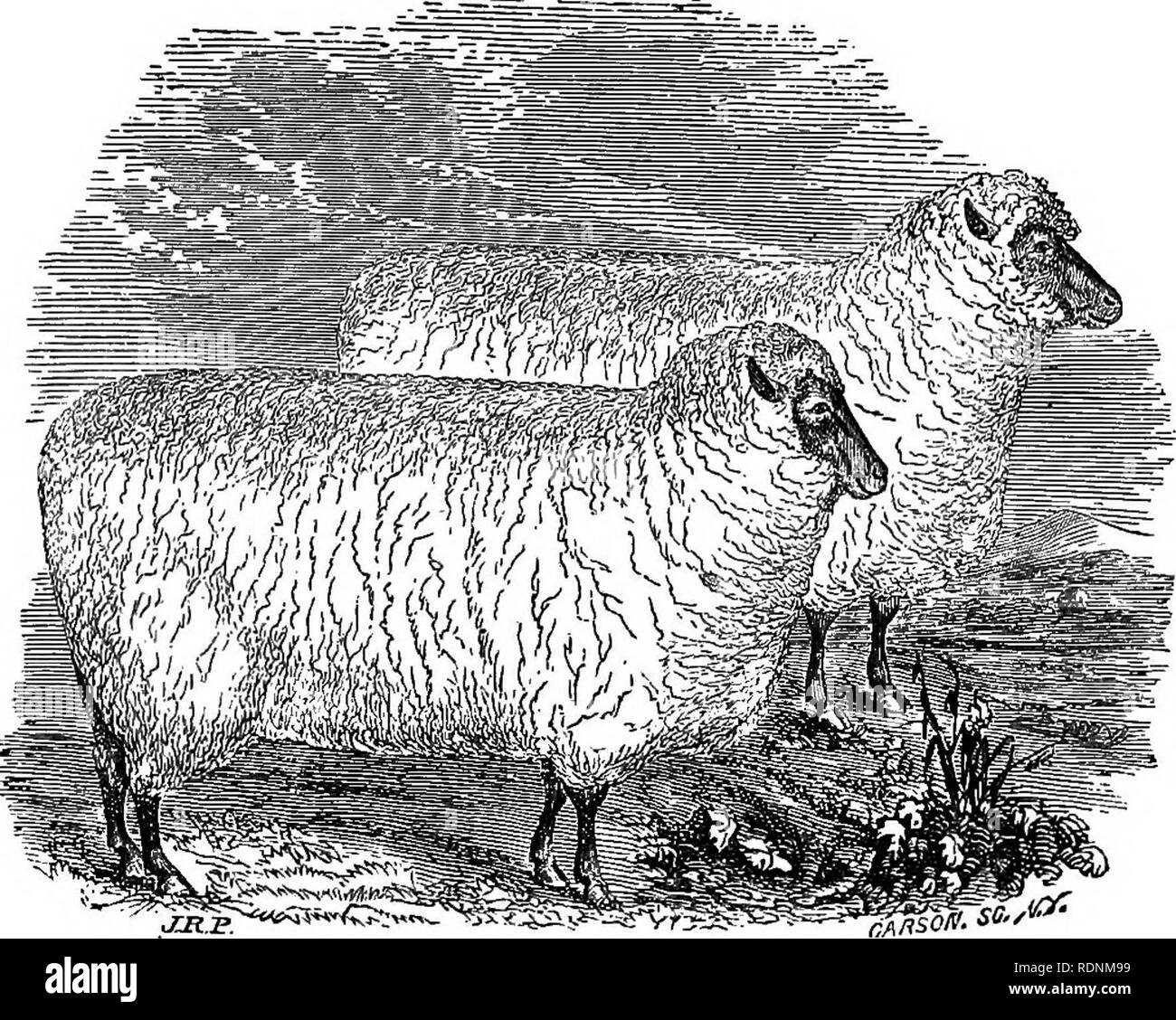 The practical shepherd: a complete treatise on the breeding