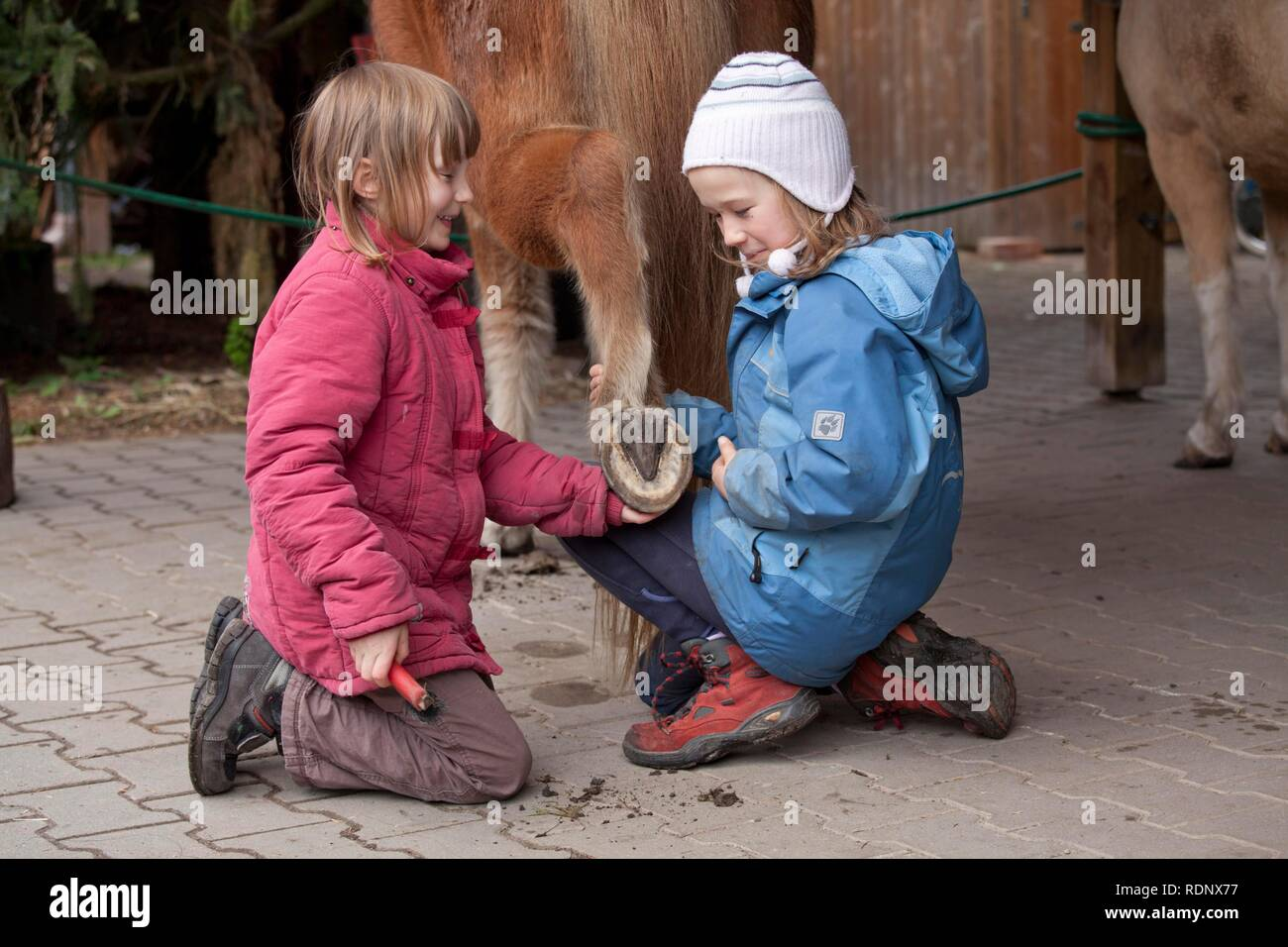 Two young girls cleaning the hooves of a pony - Stock Image