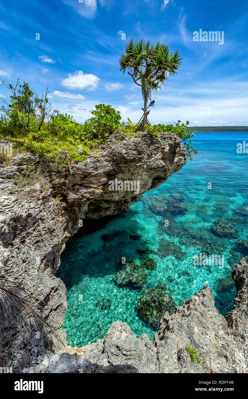 View of a single tree on top of a curved cliff with beautiful turquoise waters on the Island of Mare, New Caledonia Stock Photo