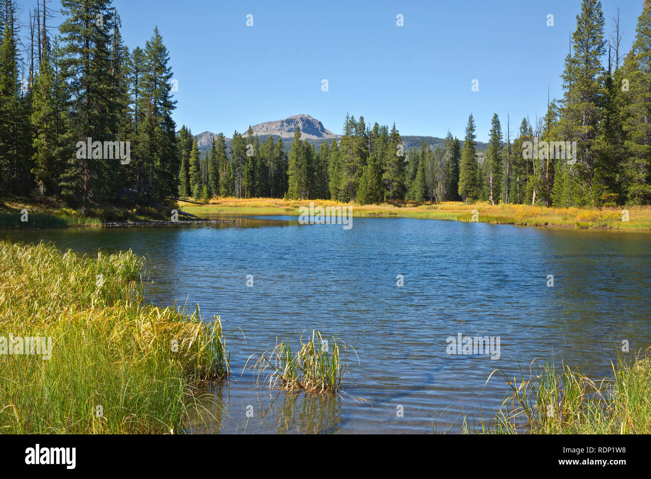 sal Gángster Salto  MT00260-00...MONTANA - Clark Fork of the Yellowstone River from the trail  to Kersey Lake in the Shoshone National Forest Stock Photo - Alamy