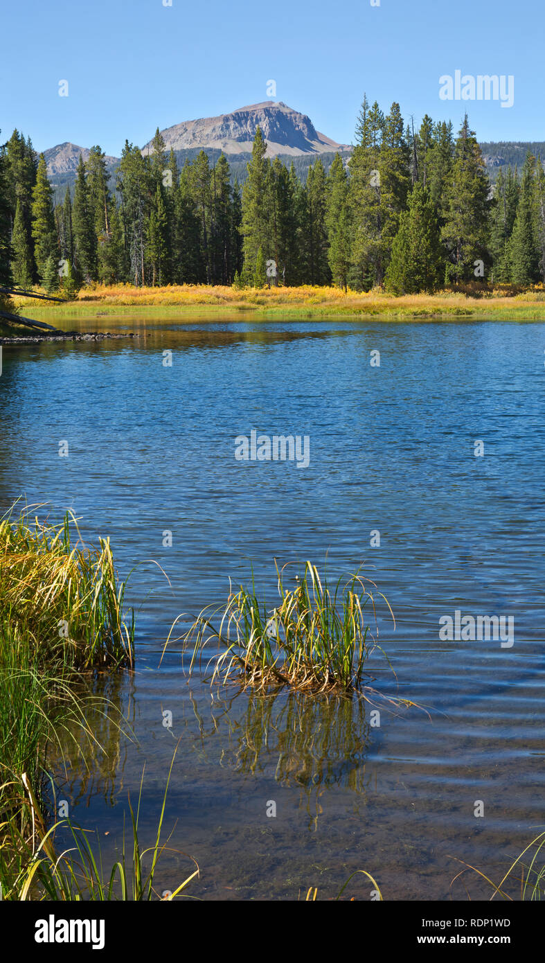 Considerar polilla Embutido  MT00261-00...MONTANA - Clark Fork of the Yellowstone River from the trail  to Kersey Lake in the Shoshone National Forest Stock Photo - Alamy