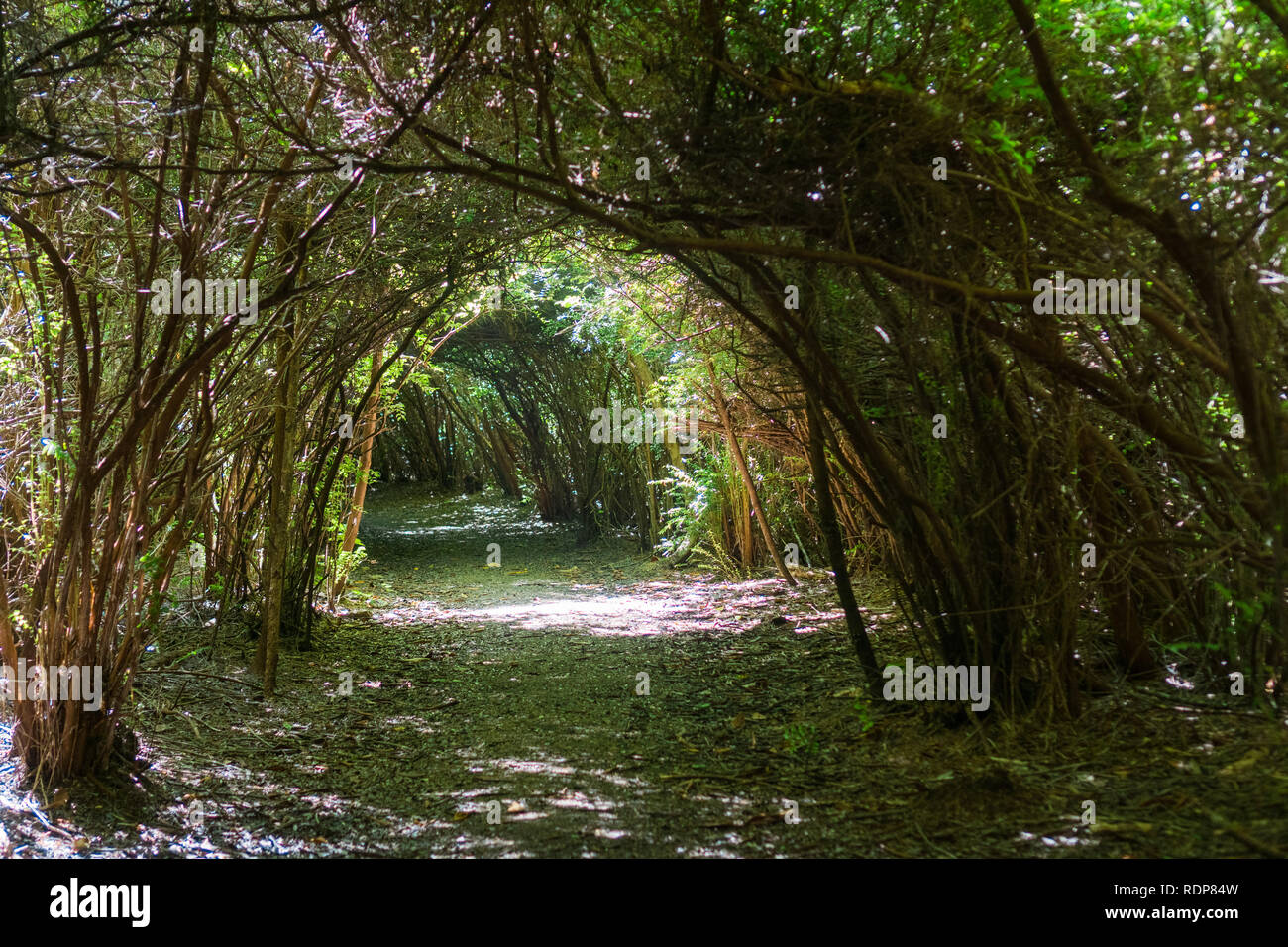 Tunnel Trail, South Slough National Estuarine Research Reserve, Coos Bay, Oregon - Stock Image
