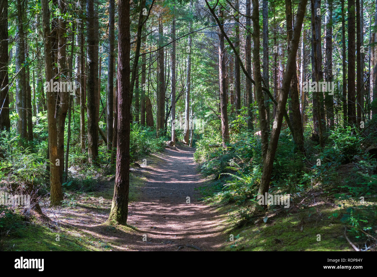 Hiking path through the forests of South Slough National Estuarine Research Reserve, Coos Bay, Oregon - Stock Image
