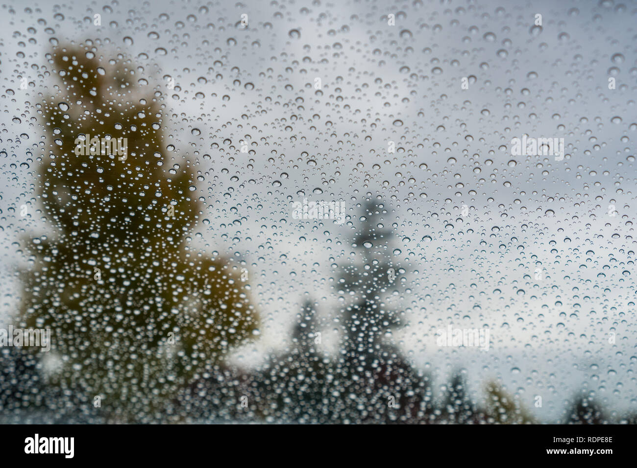 Drops of rain on the windshield; cloudy sky and autumn colored trees in the background - Stock Image