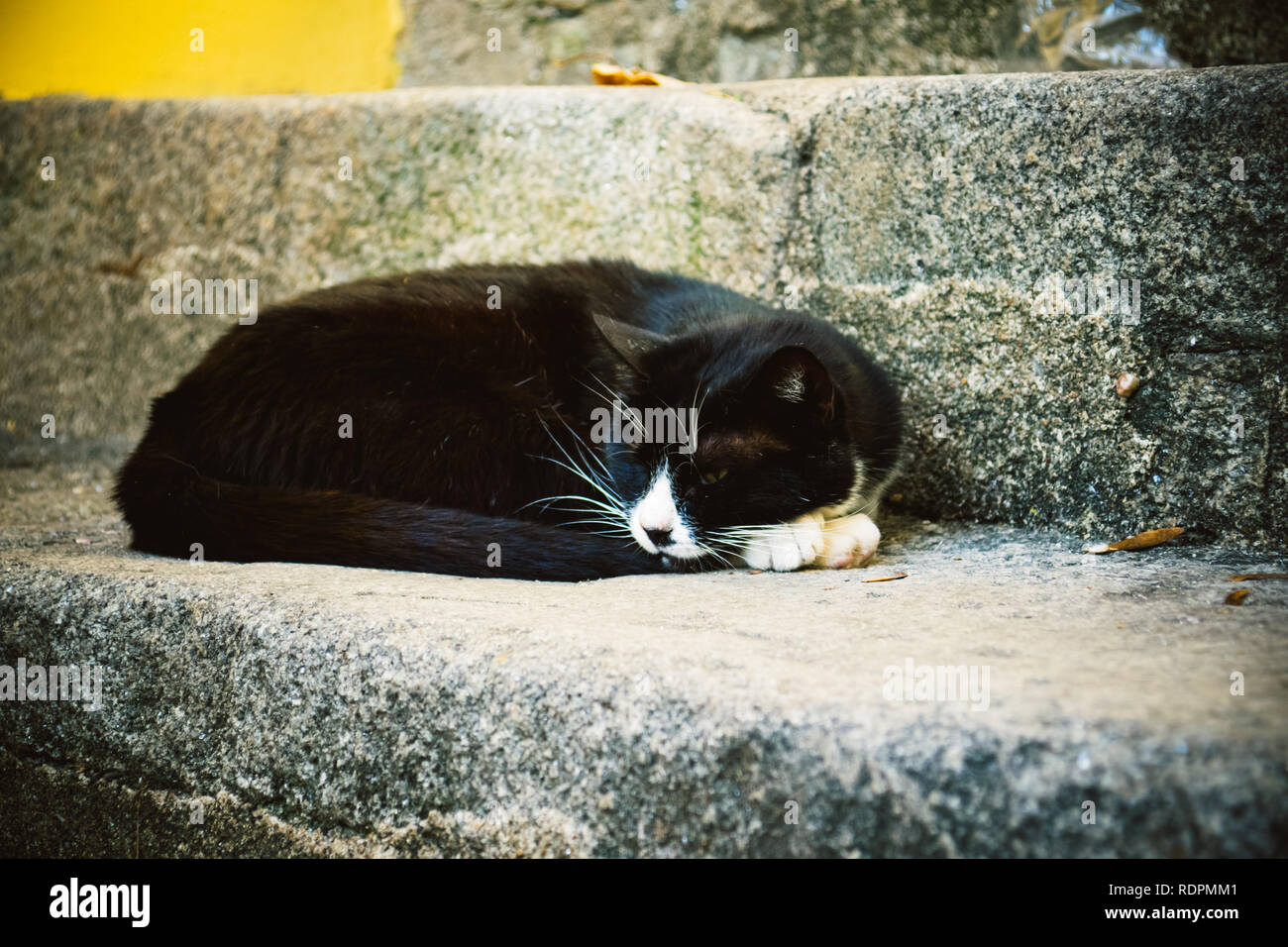 Cat on the steps - Stock Image