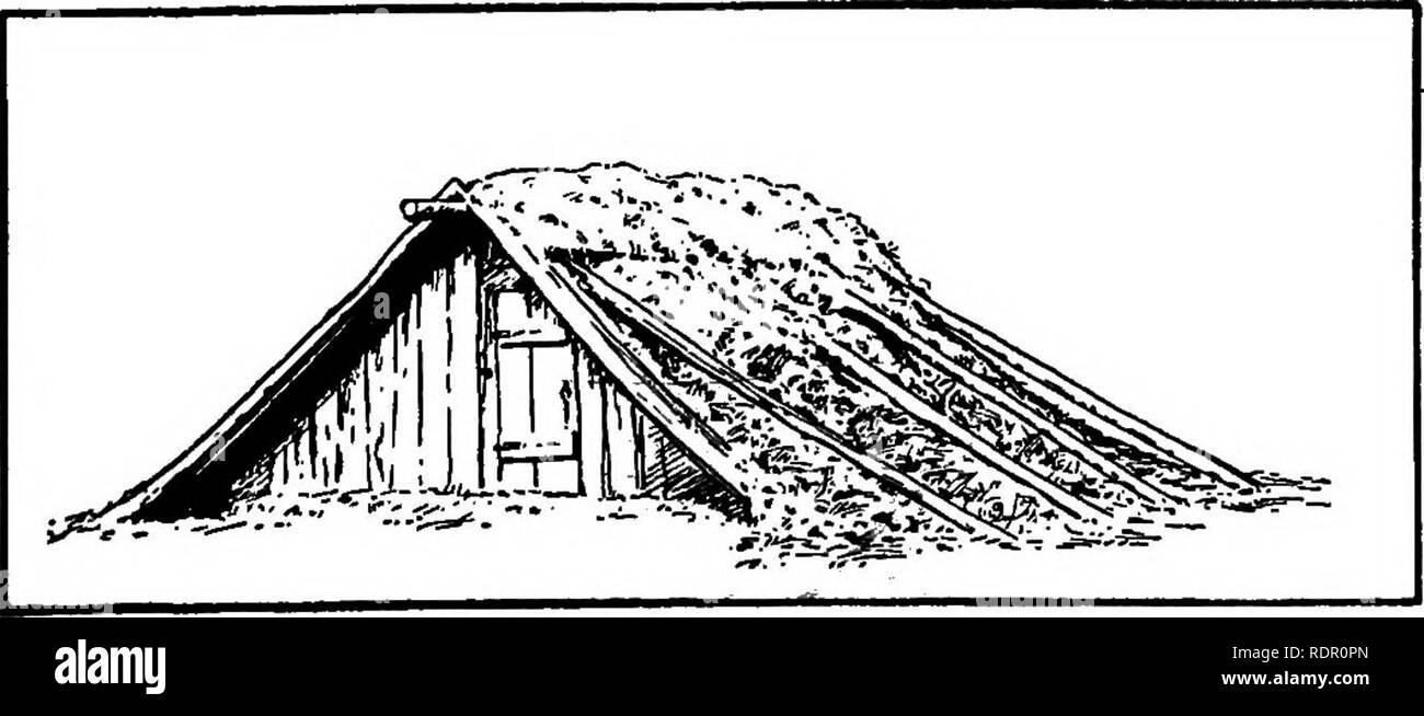 """. The sweet potato; a handbook for the practical grower. Sweet potatoes. Figure 32.— A number of sweet potato bapks illustrating the method of ventilation by the use of troughs at the top of each pile. to make several small pits rather than one large one, hecause it is hest to remove the entire contents when the pit is opened. Fig. 32 shows a number of pits with a trough ventilator placed over the top of each pile of potatoes. """" A type of storage cellar similar to the one shown in Fig. 32 is often used in the South for storing sweet potatoes. This form of storage is much better than. FlGU - Stock Image"""