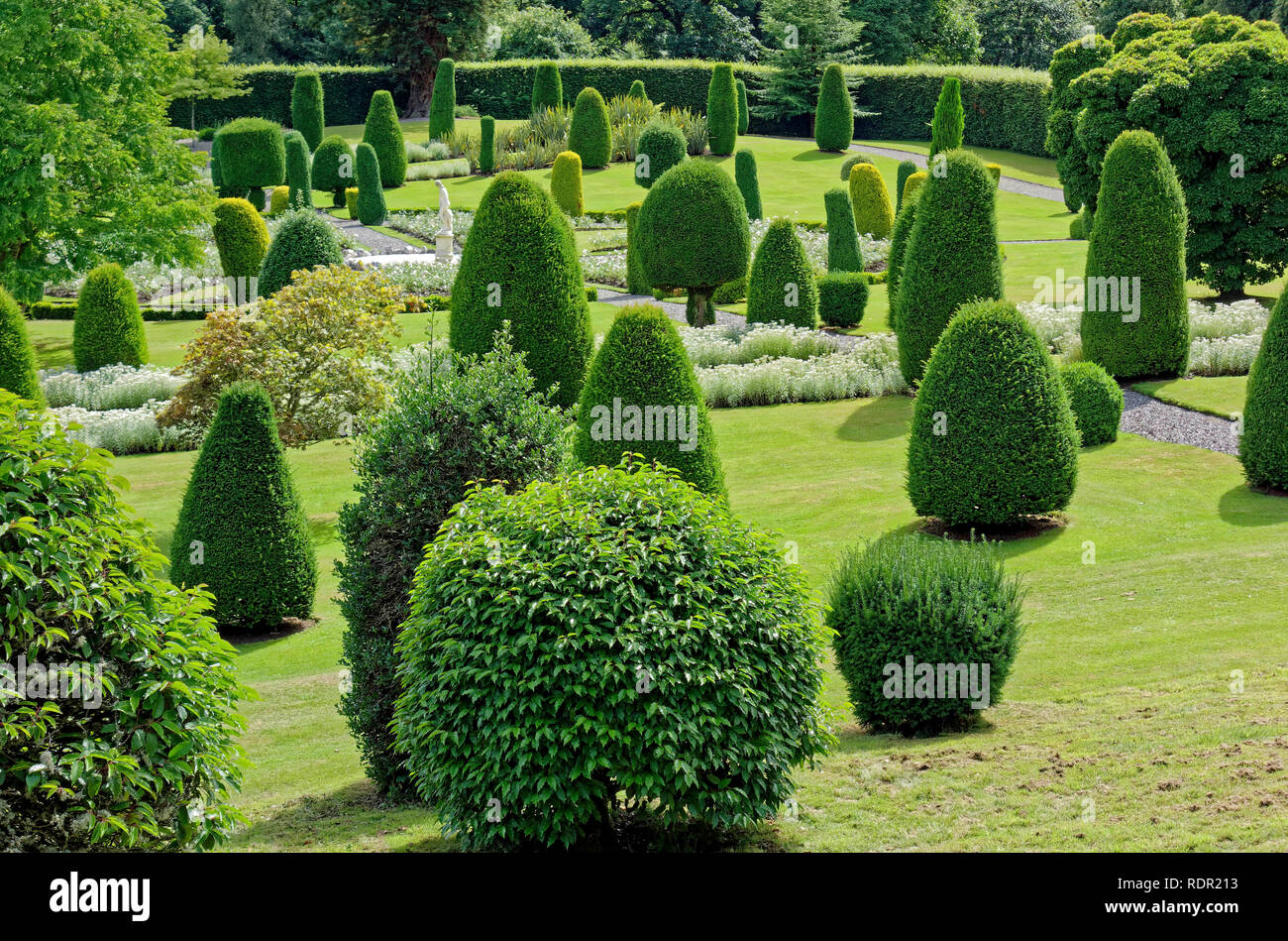 Conifers at Drummond Castle Gardens near Crieff, Perthshire, Scotland, UK - Stock Image