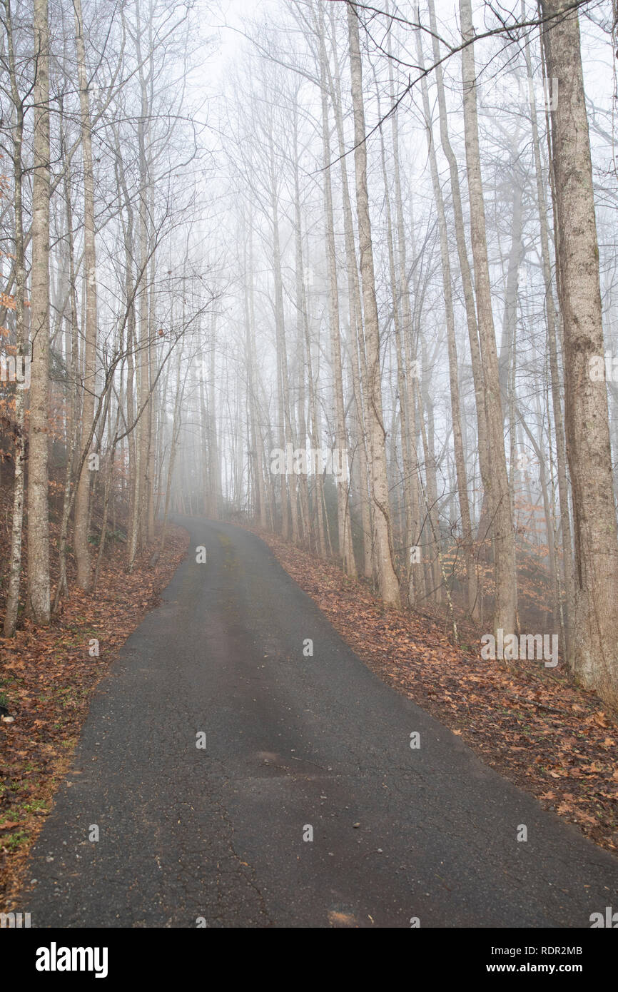 View up a rural, wooded drive in morning fog. Looking away from the sun and uphill. - Stock Image