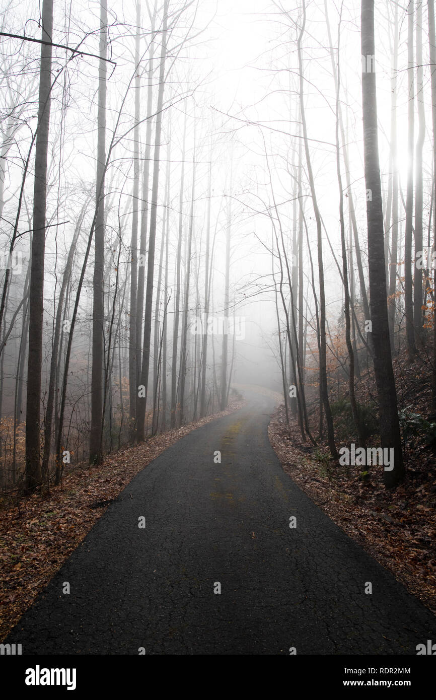 View down a rural, wooded drive in morning fog. Looking toward the sun and downhill. - Stock Image