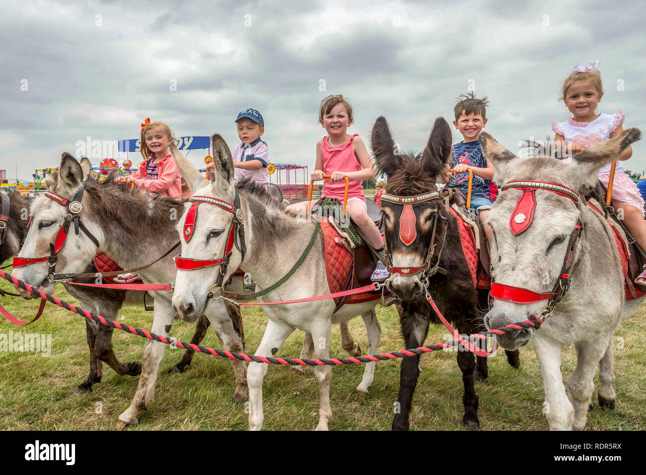 Happy children on donkey rides. Stock Photo