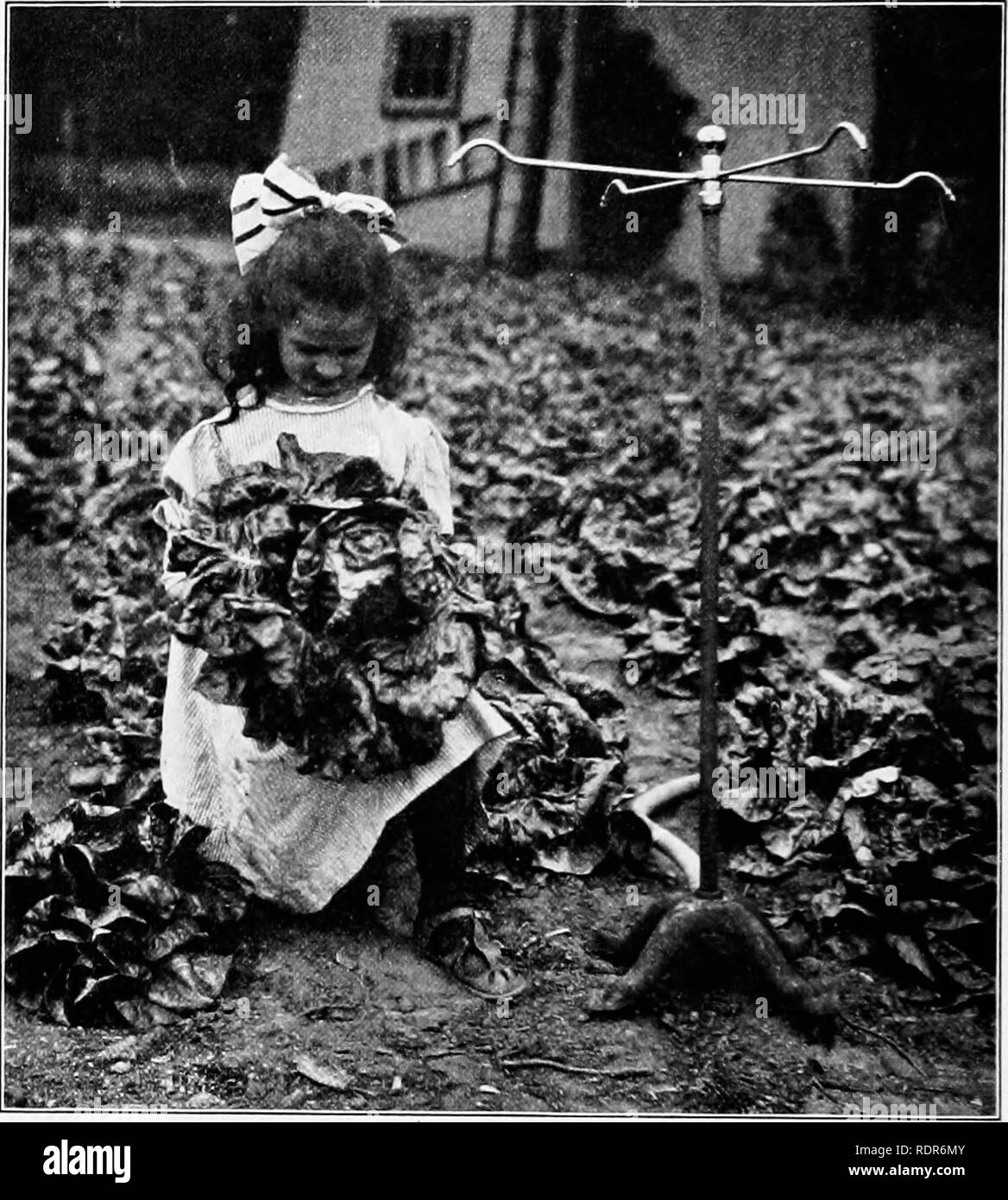 . Gardens and their meaning, by Dora Williams. School gardens. 4 GARDENS AND THEIR MEANING business questions, as these directly affect the goods they want to dispose of. They will see- the wisdom of keeping strict accounts, a practice only too frequently neglected among farmers as a class. All these practical issues, moreover, will. A YOUNG PRODUCER materially help them in deciding what to specialize in. This is not mere theory. These ideas are now being worked out in many places. In some neighborhoods children actually have their regular customers, and deliver from little push- carts the fre - Stock Image