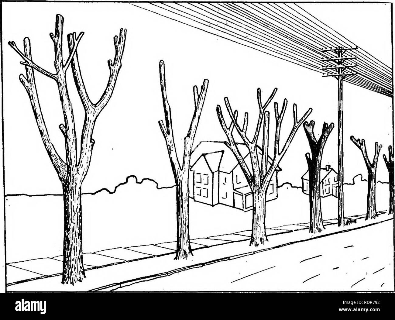 . A shade tree guide. Trees. STREET TREES. 19. Fig. .12, A Row of Old Trees Butchered to Make Room for High Wires. Compare With Fig. 13.. Please note that these images are extracted from scanned page images that may have been digitally enhanced for readability - coloration and appearance of these illustrations may not perfectly resemble the original work.. New Jersey. Dept. of Conservation and Development; Gaskill, Alfred. Union Hill, N. J. , Hudson Printing Co. Stock Photo