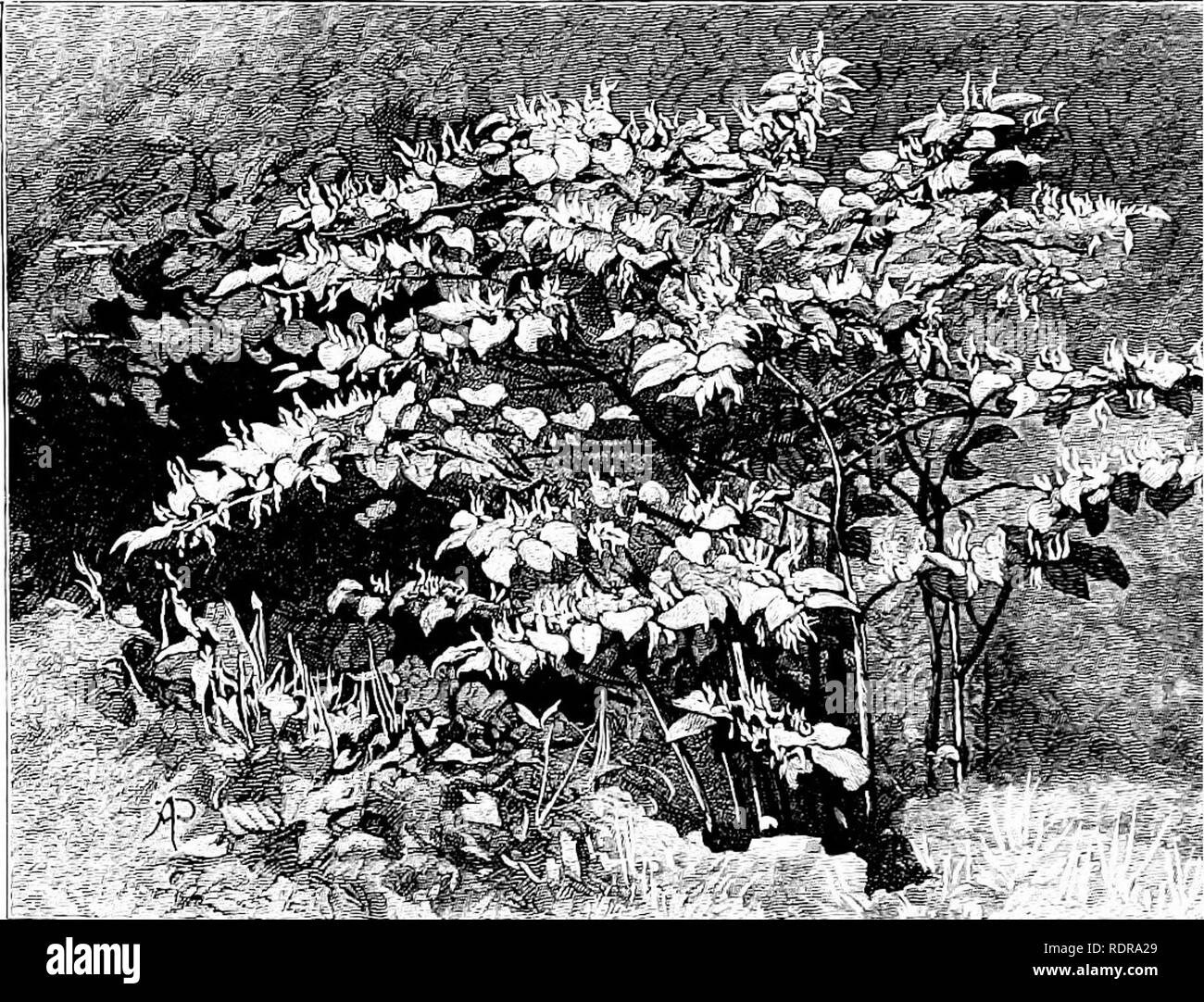 Clover Like Black And White Stock Photos Images Alamy