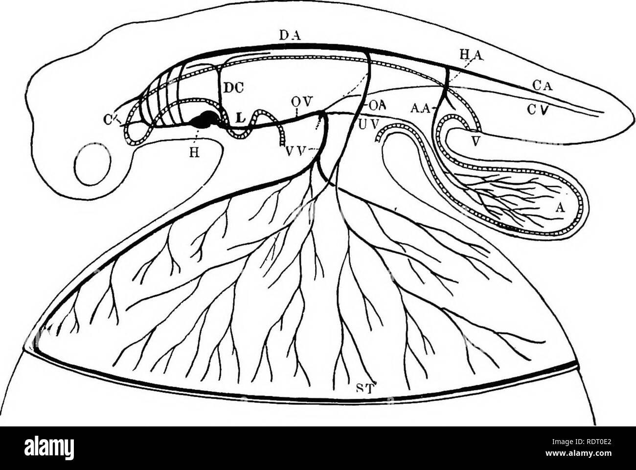 Iliac Arteries Stock Photos Iliac Arteries Stock Images Alamy