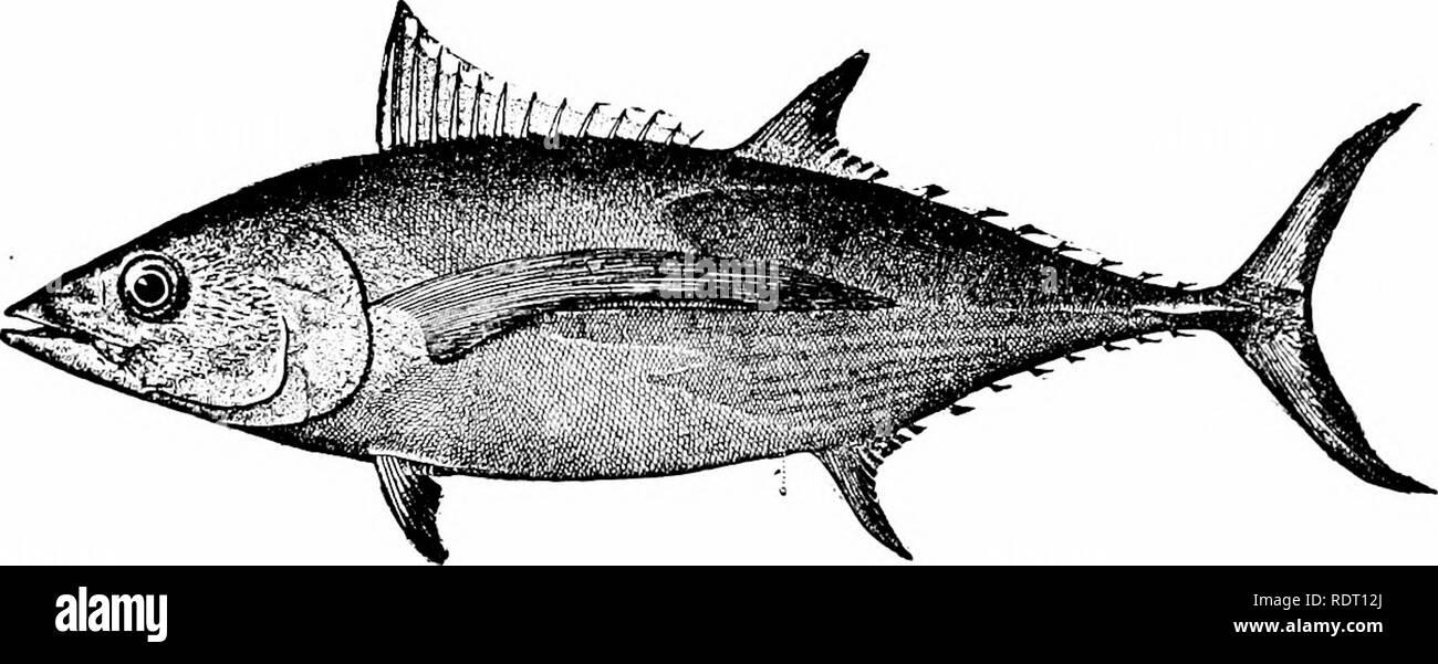 Big Game Bird Flyingfish  Marlin Barracuda Trolling Tuna Fliegender Fisch