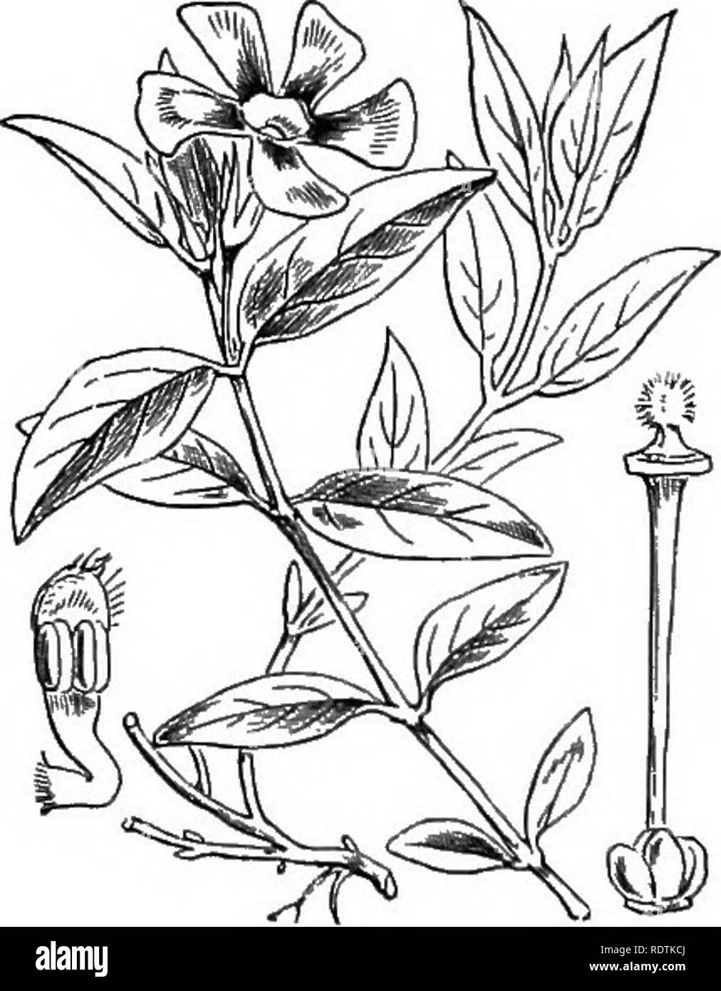 illustrations of the british flora: a series of wood engravings, with  dissections,