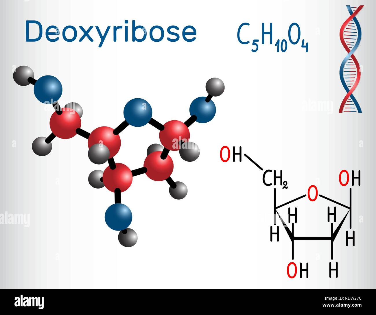 Deoxyribose molecule, it is a monosaccharide (deoxy sugar), it forms part of the backbone of DNA. Structural chemical formula and molecule model. Vect - Stock Image