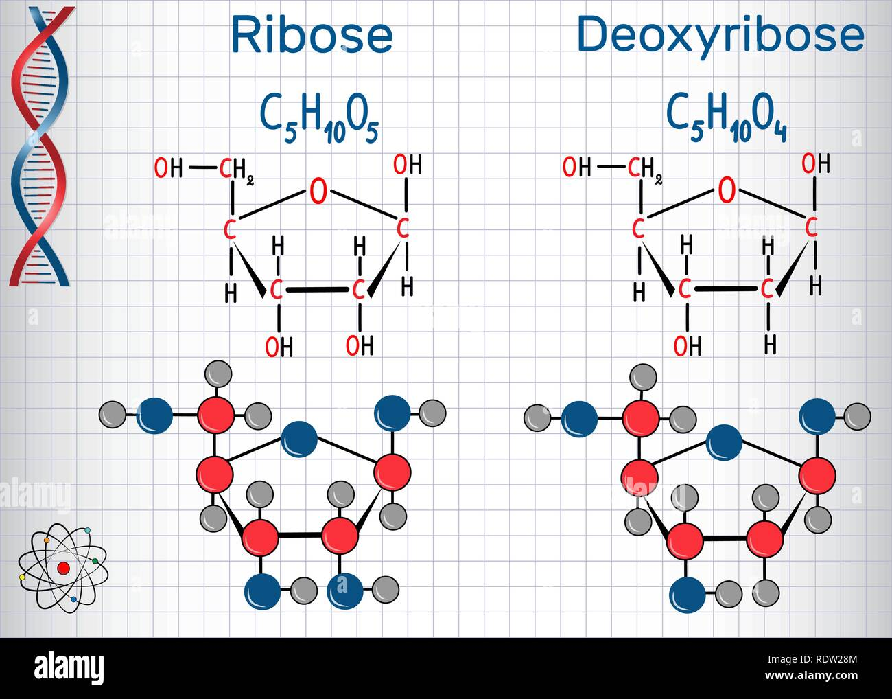 Ribose and deoxyribose molecules, they are monosaccharides and form part of the backbone of DNA and RNA. Structural chemical formula and molecule mode - Stock Image