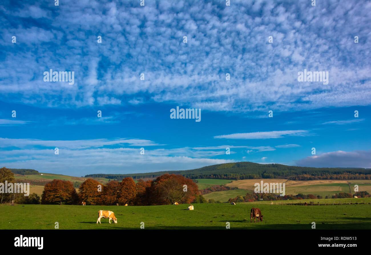 Farmland near Dufftown, Grampian, Scotland, United Kingdom - Stock Image