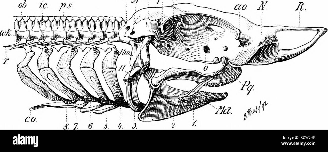 A manual of zoology. Zoology. >ou Clio IIB ATA. xiiipiiired .