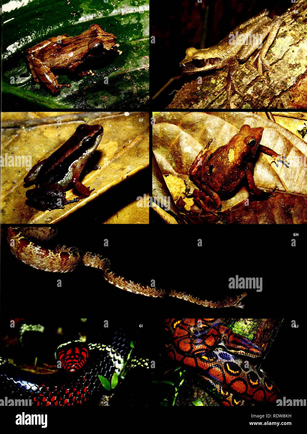 . Ecuador, Perú : Cuyabeno-Güeppí. Natural history; Natural history. . Please note that these images are extracted from scanned page images that may have been digitally enhanced for readability - coloration and appearance of these illustrations may not perfectly resemble the original work.. Alverson, William Surprison; Field Museum of Natural History. [Chicago, Ill. ] : Field Museum of Natural History - Stock Image