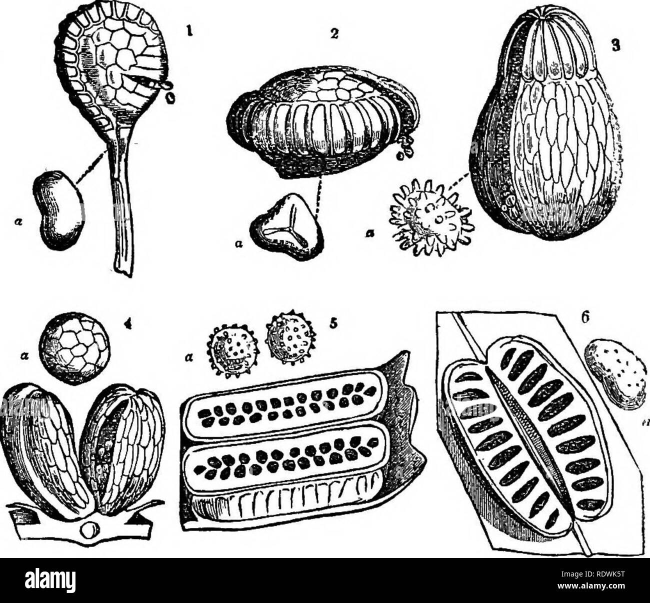 . Ferns: British & foreign. The history, organography, classification, and enumeration of the species of garden ferns with a treatise on their cultivation, etc. etc. Ferns. . Please note that these images are extracted from scanned page images that may have been digitally enhanced for readability - coloration and appearance of these illustrations may not perfectly resemble the original work.. Smith, John, 1798-1888. London, Hardwicke - Stock Image