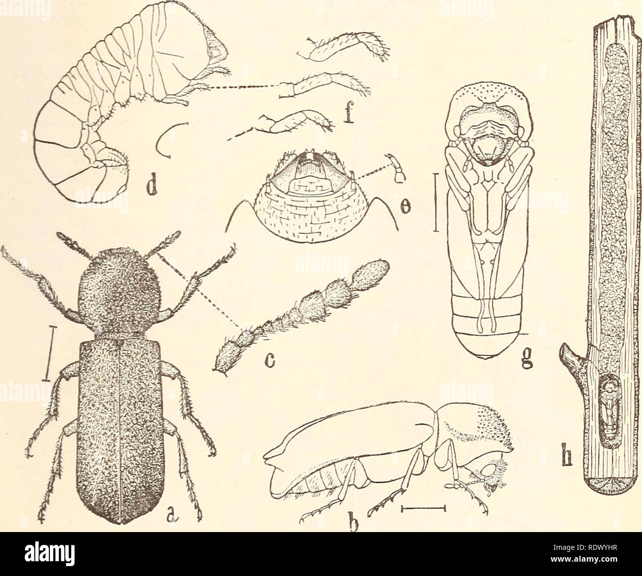 Economic entomology for the farmer... THE INSECT WORLD. 195 The ...