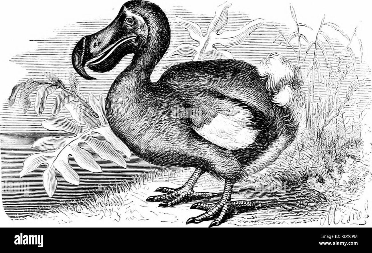 Reptiles And Birds A Popular Account Of Their Various Orders With A Description Of The Habits